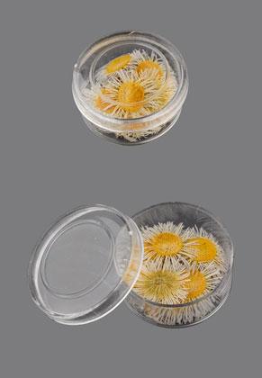 www.sayila.nl - Gedroogde bloemen geverfd 17mm (20 st.) in kunststof doosje