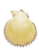 www.sayila.co.uk - Shell pendant with metal eye 50-70x40-60mm - D28385